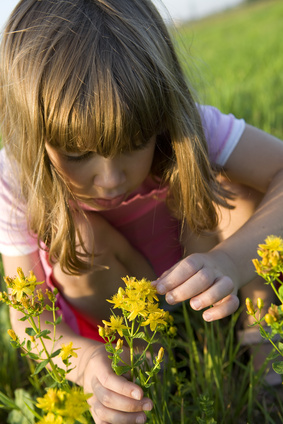 little cute girl looking at St.-John's wort.
